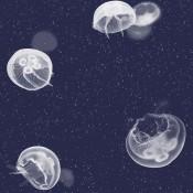 Essentia - Jellyfish - Coordonné - 5800011