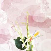 Lara Costafreda - Rose dream - Coordonné - 4800071